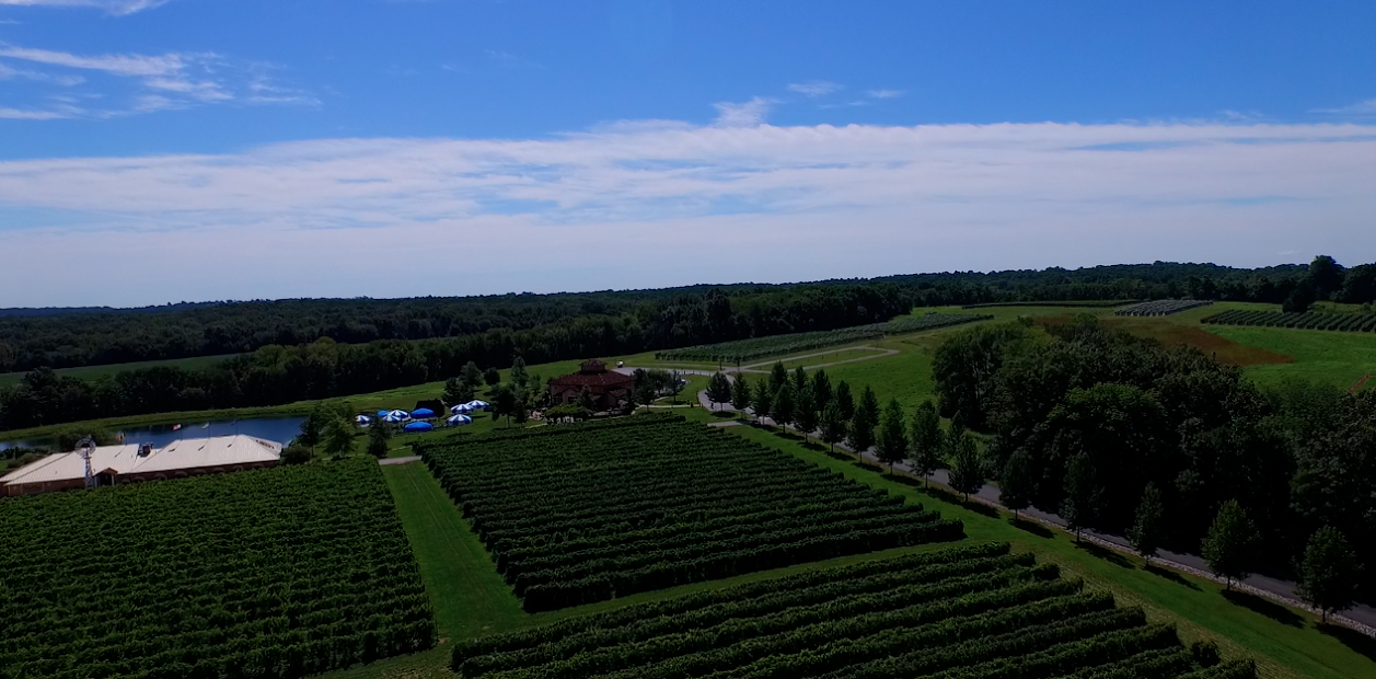 Aerial Blue Sky Vineyard