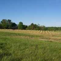 Planting Blue Sky Vineyard